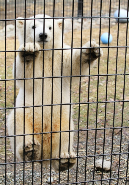 Please Stop Going to Zoos | Jessica Barker